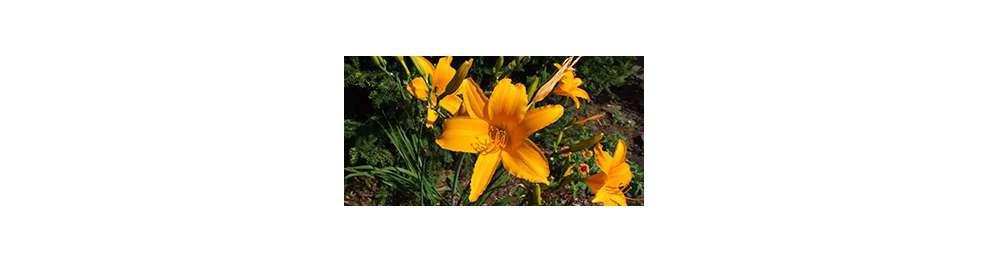 odcienie żółtego i pomarańczowego